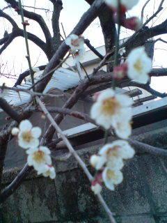 春2.jpg
